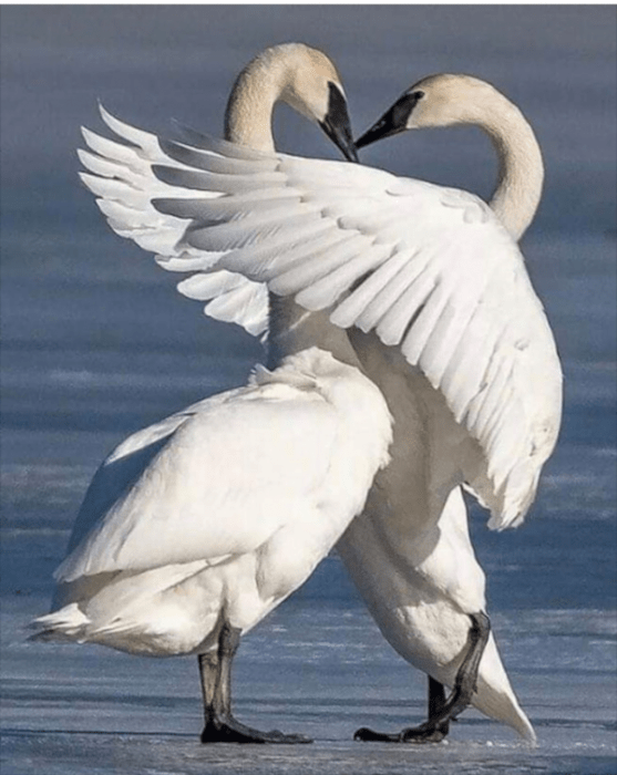 Niveluri ale iubirii și aromaterapie